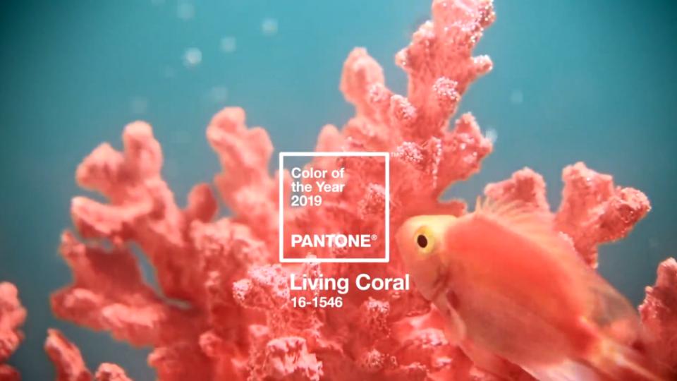 culoarea anului 2019 living coral